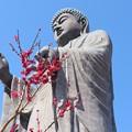Photos: 牛久大仏