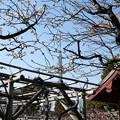 Photos: 亀戸天神