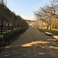 立春の散歩道