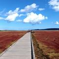 サンゴ草遊歩道