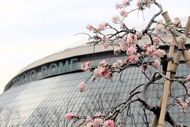 Photos: 球春