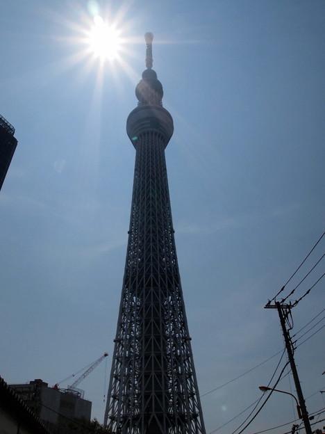 Photos: 真夏の陽光