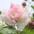 Photos: 10月の花