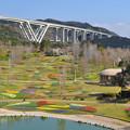 Photos: 春・ポプラの丘の花風景