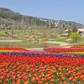 Photos: 春・大地の虹エリアの花風景