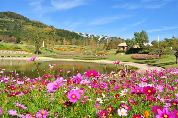 秋・大地の虹エリアからの花風景