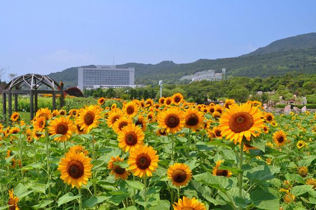 夏・大地の虹エリアの花風景