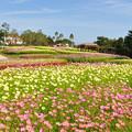 Photos: 秋・大地の虹エリアの花風景