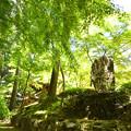 常隆寺 初夏の木陰