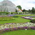 ロンドン 王立植物園キューガーデン