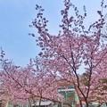 写真: ピンクがいっぱい