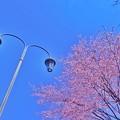 Photos: 5月2日:帯広緑ヶ丘公園