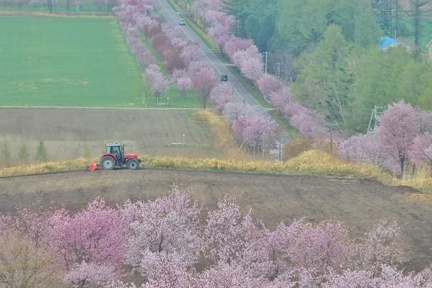 桜六花公園の展望台から1