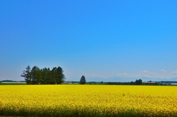 黄色と水色と