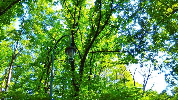 緑ヶ丘公園にて