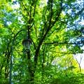 Photos: 緑ヶ丘公園にて