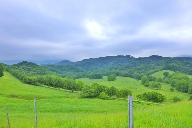 Photos: 八千代牧場