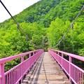 Photos: ピンクの吊橋