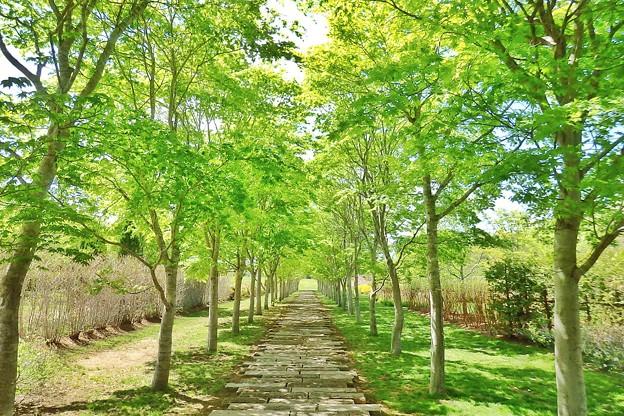 中札内美術村の石畳と並木道