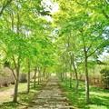 Photos: 中札内美術村の石畳と並木道