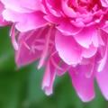 ☆六月の赤い花☆