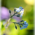 写真: 足元の小花
