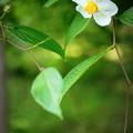 Photos: 思い出の花