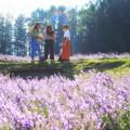 写真: ラベンダー畑のカメラ女子