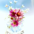 写真: 小花