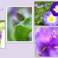 写真: むらさきの花