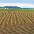 写真: 豆畑