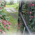 Photos: 写り込みの花園