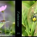 写真: 昆虫のファッション!!!
