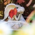 写真: 秋深し天使もZzz…