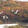 秋山を飛ぶ(11)