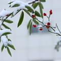 写真: 雪の季節