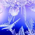 Photos: 霜の花が咲いた^^