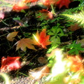 Photos: 光る紅葉