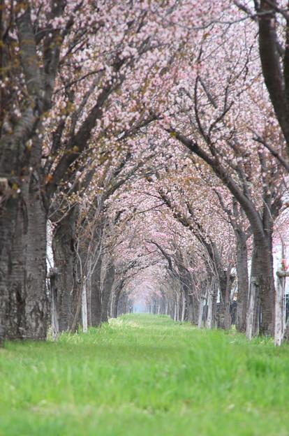 春のトンネル~