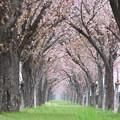 Photos: 春のトンネル~
