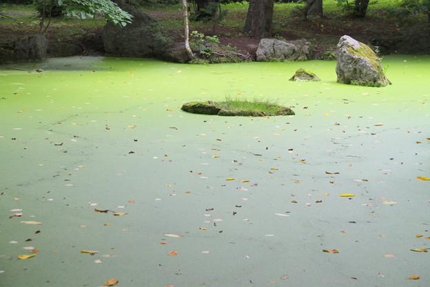 Photos: 絨毯の池