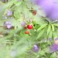 Photos: 小さなイチゴ^^