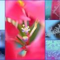Photos: どちらも花ならばぁーーー
