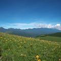 ニッコウキスゲと八ヶ岳