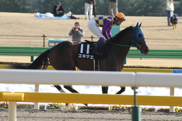 エキマエ 返し馬(14/02/22・ヒヤシンスステークス)