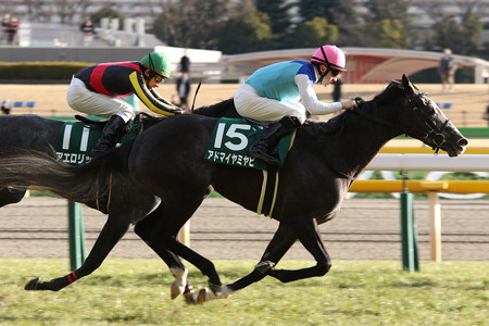 アドマイヤミヤビ レース(17/02/11・第52回 デイリー杯クイーンカップ)