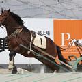 キタサカエセンプー(17/04/09・13R・平成29年度第1回能力検査)