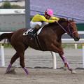 Photos: スアデラ レース(17/05/03・閃光スプリント)