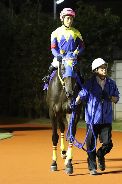 写真: ヤマミダンス パドック_4(17/11/08・第25回 ロジータ記念)
