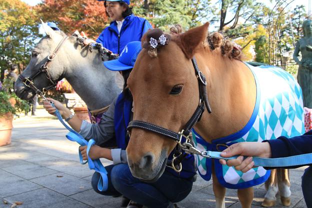 写真: ラッキー_1(17/11/11・東京競馬場)